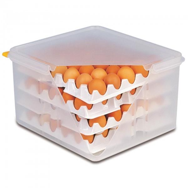 Lagen für Eier-Box - Polystyrol - APS 82420